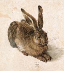 Albrecht Durer  Hare 1502