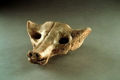 Camelid sacrum in the shape of a canine Tequixquiac, central Mexico. 14000-7000 B.C.E. Bone. The shape was created by using subtractive techniques and utilizing already apparent features in the bone, like the holes for eyes. It was a first look at how people began manipulating their environment to created what they wanted.