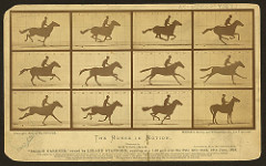 The Horse in Motion Eadweard Muybridge. 1878 C.E. Albumen print Muybridge spent the rest of his career improving his technique, making a huge variety of motion studies, lecturing, and publishing. As a result of his motion studies, he is regarded as one of the fathers of the motion picture. Muybridge's motion studies showed the way to a new art form.