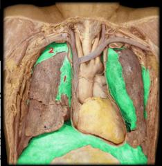 #1 mediastinal pleura #2 cervical pleura