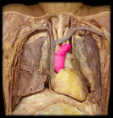 ascending aorta