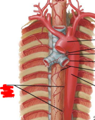 esophageal arteries