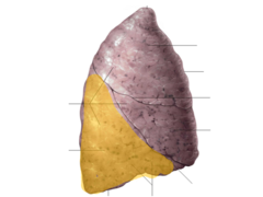 inferior lobe of right lung