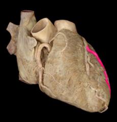 left marginal artery