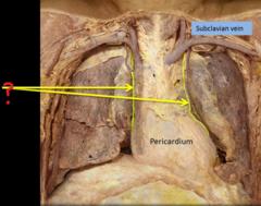 phrenic nerves pericardiacophrenic vessels