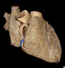 small cardiac vein