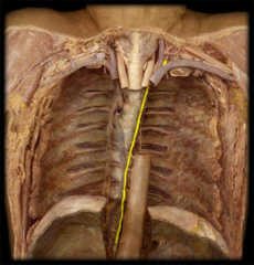thoracic duct