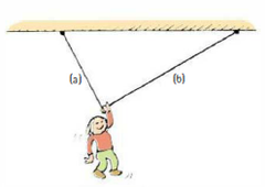 Nellie Newton hangs motionless by one hand from a clothesline. Which side of the line, a or b, has the greater  a. horizontal component of tension? b. vertical component of tension? c. tension?